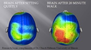 Active brain vs sedentary